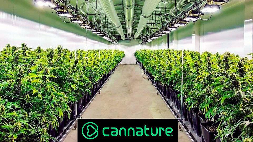 Cannature cultivos MJ